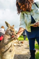 woman feeding a kangaroo in australia on a Chase Your Adventure Tour