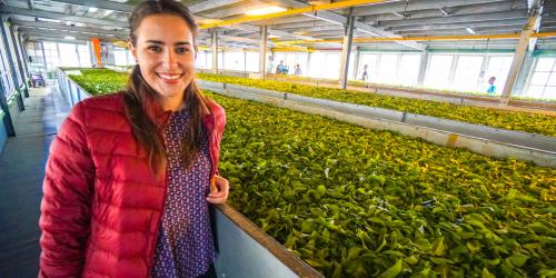 Damro Tea Plantation as one of the Things to do in Nuwara Eliya, Sri Lanka