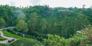 Damro Tea Plantation as one of the Things to do in Nuwara Eliya, Sri Lanka