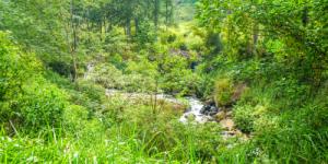 Waterfalls Things to do in Nuwara Eliya, Sri Lanka