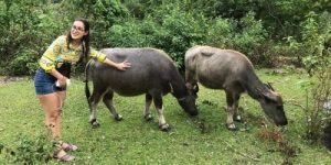 Ha Giang Loop Buffalo